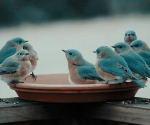 bird, blue, and animal image