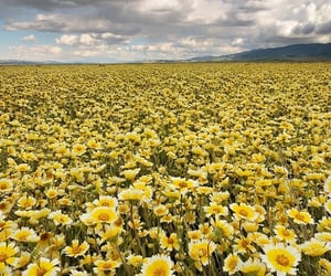 clouds, spring, and yellow image