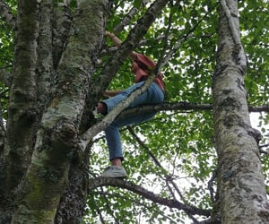 adventure, climb, and branch image