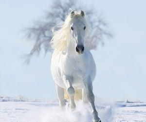 horse, white, and run image