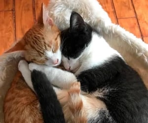 animals, cats, and love image