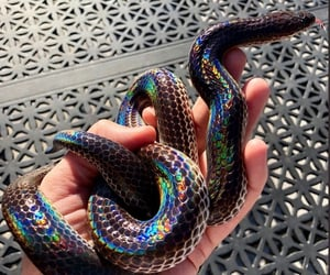 snake, aesthetic, and holographic image