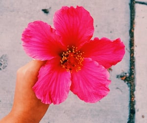 aesthetic, pink, and saturated image