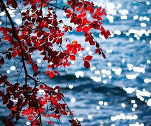 red, nature, and water image