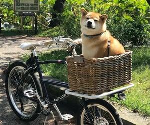 animal, dog, and bike image