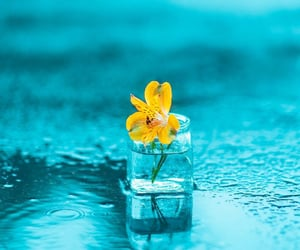 blue, flower, and puddle image