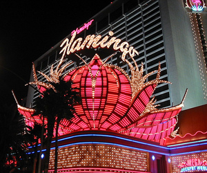 flamingo and Las Vegas image