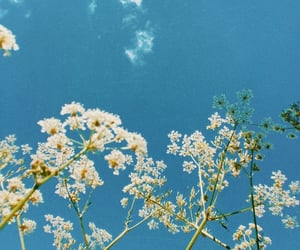 blue, film, and flowers image