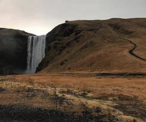 cow, iceland, and landscape image