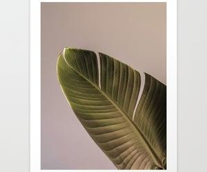 banana leaf, wall art, and art print image