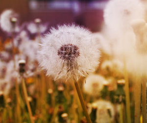 flower and blow me away image