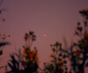 moon, sky, and flowers image