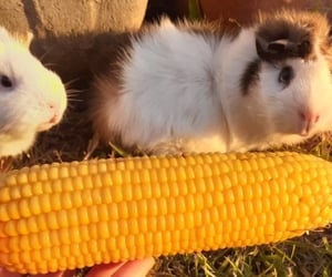 amarelo, corn, and milho image