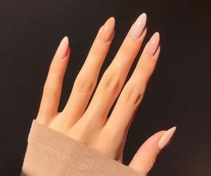 nail polish, polish, and rose image