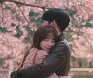article, kdrama, and when the camellia blooms image