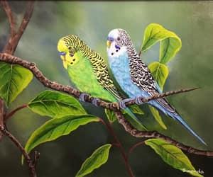animals, beautiful, and budgies image