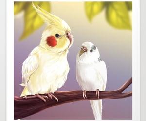 animals, birds, and cockatiel image