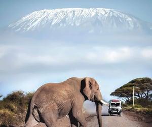 elefante, animales, and paisaje image