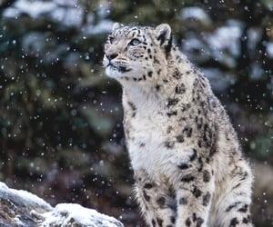 animal, nature, and feline image