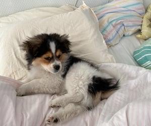 dog, matilda, and puppy image