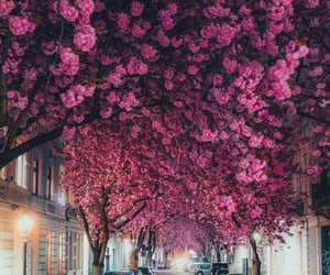 flowers, germany, and beautiful image