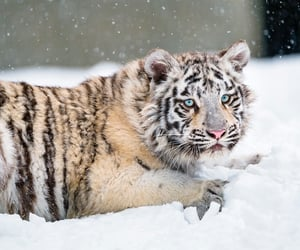 animal, blue eyes, and cold image