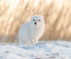 beautiful, nature, and animal image