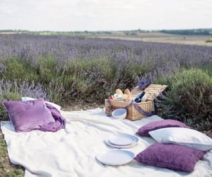 lavender, picnic, and lavandula image