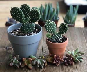 botany, cactus, and flower arrangement image