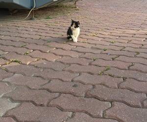 adorable, kitten, and kittens image