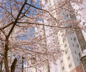 blossom, three, and city image