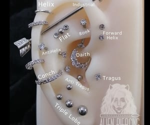 conch, diamonds, and earrings image