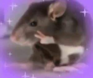 meme, reaction, and rat image
