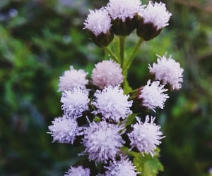baby's breath, flowers, and hope image
