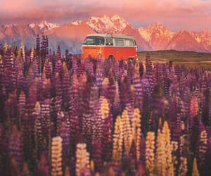 flower field, mountains, and new zealand image