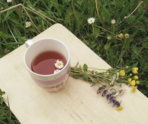 flowers, nature, and tea image