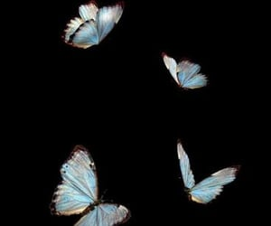 butterfly, overlay, and aesthetic image