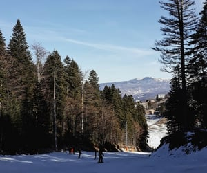 blue, trees, and winter image