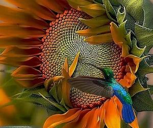 colibri, flores, and girasol image