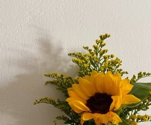 flower, gift, and sunflower image