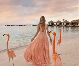 amazing, peach, and pink image
