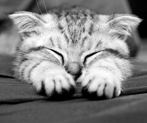 awww, cat, and cute image