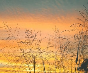 afternoon, light, and orange image