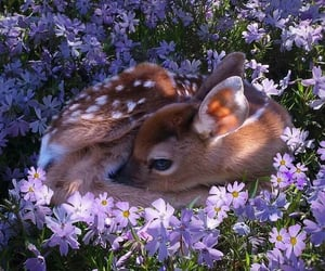 animals, flowers, and cute image