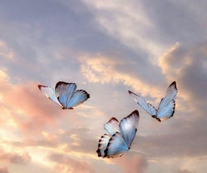 butterfly, sky, and aesthetic image