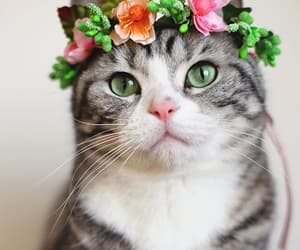 cat, flowers, and animals image