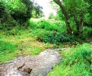 green, nature, and river image