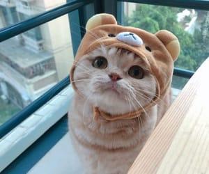 cat, amazing, and animal image