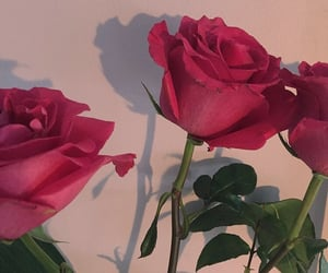 rose and aesthetic image