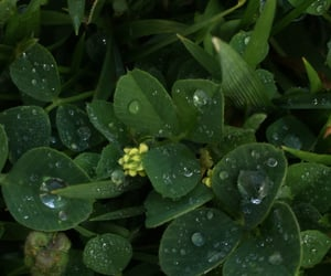 backyard, clovers, and dew drops image